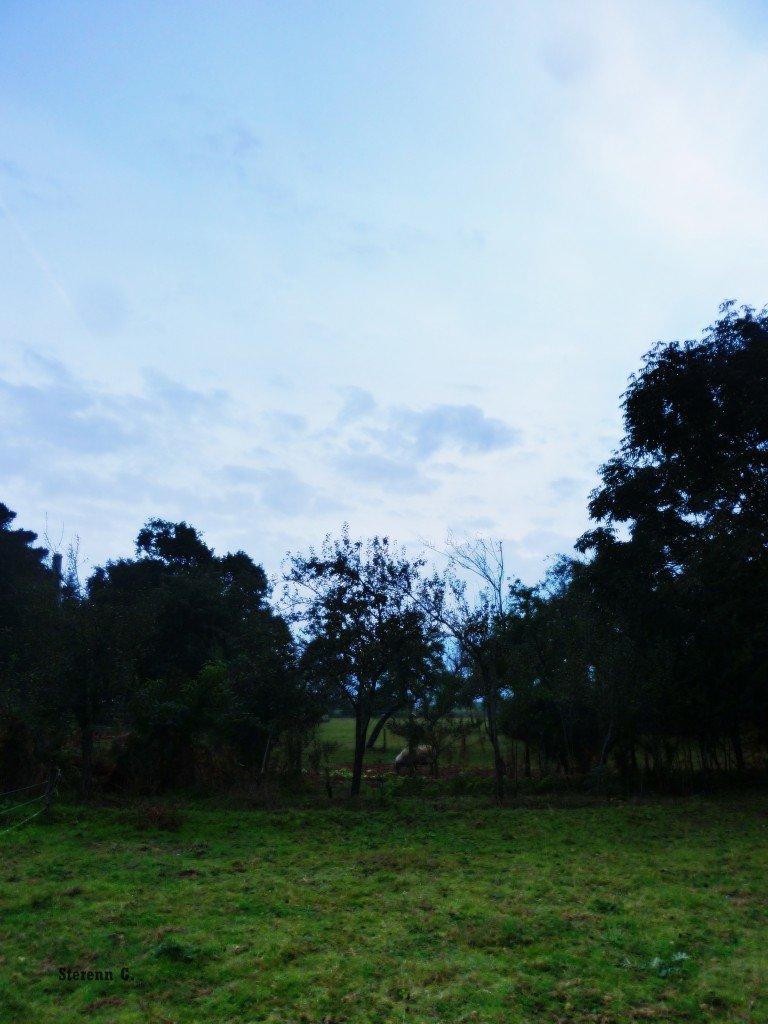 Brume d'automne dans Chroniques d'un Gourou P1060090-768x1024
