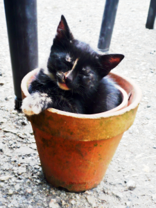 Heureux dans une boîte. dans Chroniques d'un Gourou cerise-pot-signee-+-petite-225x300